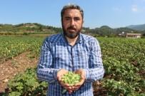 Yöneticiliği Bırakıp Çiftçi Oldu, 'Huzuru Tarımda Buldum' Dedi