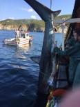 (Özel) Erdek'te Ağlara Takılan Köpek Balığı Denize Bırakıldı