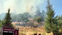 Aydın'da Orman Ve Zeytinlik Yangını