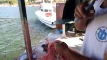 Barınağın Ağzı Kum Dolunca Balıkçılar Denize Açılamadı