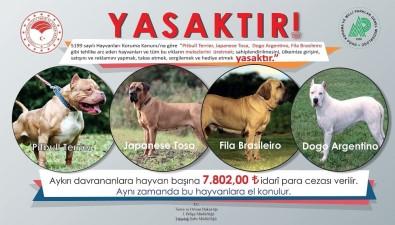 Bu Hayvanların Ülkeye Girişi, Satışı Ve Sahiplenilmesi Yasak