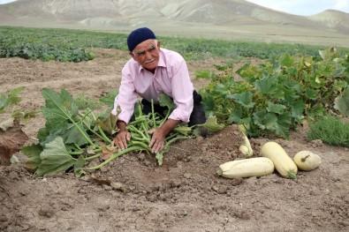 Su Ve Gübre Kullanmadan Kıraç Toprakta Ürün Yetiştiriyor
