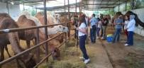 AB Devesütü (Camelmılk) Proje Ekibi Aydın'da İnceleme Yaptı