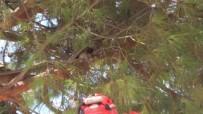 Burhaniye'de Ağaçta Mahsur Kalan Kediyi İtfaiye Kurtardı