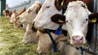 Muğla'nın Hayvansal Üretim İstatistikleri Açıklandı