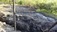 Otların Temizlenmesi İçin Yakılan Ateş Ceviz Ve Elma Ağaçlarına Zarar Verdi