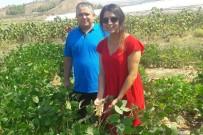 PAÜ'de Soya Fasulyesiyle İlgili Ön Verim Çalışmalarına Başlandı