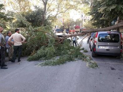 Fatih'te Şiddetli Rüzgardan Ağaç Otomobilin Üstüne Devrildi