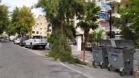 Milas'ta, Rüzgarın Etkisiyle Bir Çam Ağacının Dalı Kırıldı