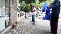 MUHABIR - Yağmurda Islanan Köpeği Kıyafetiyle Kuruladı