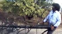 Yangınlara Dikkat Çekmek İçin Yanmış Çam Ağacını Kente Taşıdı