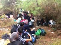 TEKEV - Ayvalık'ta 48 Göçmen Ve 3 Organizatör Yakalandı