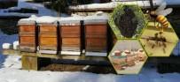 Bal Hasadından Hemen Sonra Arılara Kış Bakımı Yapılmalı