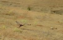 Bayburt'ta Kızıl Şahin Doğaya Salındı
