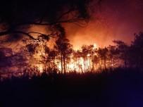 Ortaca'daki Yangına Şiddetli Rüzgar Nedeniyle Güçlükle Müdahale Ediliyor