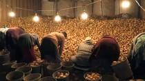 Üretimdeki Artış Patates Fiyatını Düşürdü