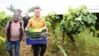 Üzüm Bağına Giren Başkan Öküzcüoğlu, İşçilerle Birlikte Çalıştı