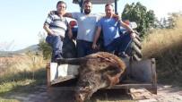 2 Saat Kovalamaca Sonrası 290 Kiloluk Domuzu Vurdular
