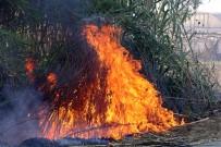 Antalya'da Seraları Tehdit Eden Sazlık Yangını Korkuttu