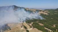 ORMAN İŞÇİSİ - Aydın'da 2.5 Hektar Ormanlık Alan Yandı