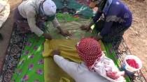 'Azezi Üzümü'nün Şifalı Lezzetlere Yolculuğu Başladı
