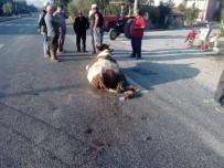 Beyşehir'de Hafriyat Kamyonu Yola Çıkan İneğe Çarptı