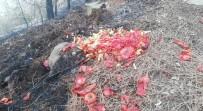 Sorumsuz Piknikçiler Yangın Çıkardı