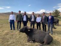 Vali Yardımcısı Gölbaşı'dan Yüksekova'ya Ziyaret