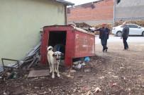 Kamera Da Köpek De Hırsızlara Engel Olamadı