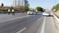 Çevre Yoluna Çıkan Başıboş Eşekler, Sürücülere Ve Polislere Zor Anlar Yaşattı