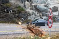 Zigana Dağı'nda Yola Düşen Ağaç Gümüşhane-Trabzon Karayolunu Ulaşıma Kapattı