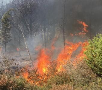 Silivri'de 3,5 hektarlık orman kül oldu