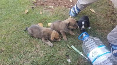 Tellere Takılan Yavru Köpeklerin İmdadına İtfaiye Yetişti