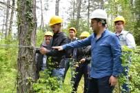 Ulus MYO Ormancılık Alanında Bir İlki Gerçekleştirdi