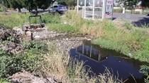 İzmir'de Sulama Kanalında Balık Ölümleri