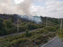 İstanbul'da Çekmece Nükleer Araştırma ve Eğitim Merkezi'nde ağaçlık alanda yangın