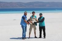 Emine Erdoğan Ve Bakan Kurum, Salda Gölü'nde İncelemelerde Bulundu