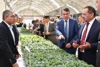 OSMAN KAYMAK - Japonlardan Bafra'ya Tarım Yatırımı