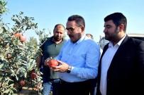 ORMAN VE KÖYİŞLERİ KOMİSYONU - AK Parti'li Doğru Açıklaması 'Pamuk Üreticisi Primden Memnun Kalacak'