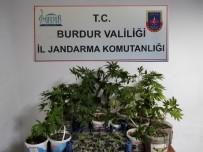 Ceviz Arazilerine Yasa Dışı Kenevir Ektiler, Serbest Bırakıldılar