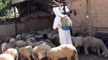 MECIDIYE - Ilgın'daki Hayvan Pazarında 'Veba' Karantinası