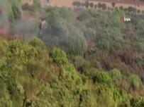 İstanbul Valiliği Açıklaması 'Ormanda Yangın Çıkarmaya Çalışan Şüpheli Yakalandı'