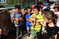 Öğrenciler Sahiplendiği Sokak Köpeğine Okul Bahçesinde Bakacaklar