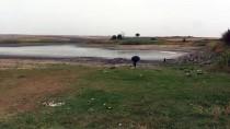 Sağanak, Göletteki Balıklara 'Can Suyu' Oldu