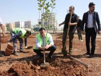 Türkiye'de Bir İlk Açıklaması Sitelere Meyve Ağacı Ekme Zorunluluğu Getiriliyor