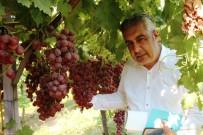 Alaşehir'de 300 Üretici İyi Tarım Uygulamaları Yapıyor