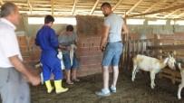Burhaniye'de Ağıl Yangınında 42 Keçi Telef Oldu