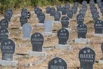 'Hayvan Mezarlığı' İle Halk Sağlığı Korunmaya Çalışılıyor