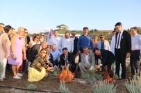 Adana'da Lavanta Üretimi Artıyor