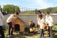 Ziya Selçuk - Sahipsiz Köpeklerin Yeni Yuvası Okul Oldu